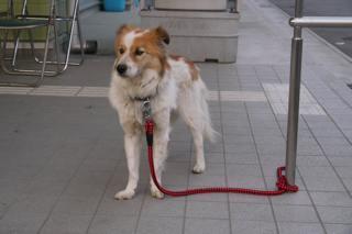 避難所の犬01.jpg